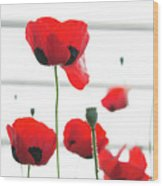 Poppies, Lovely Poppies Wood Print