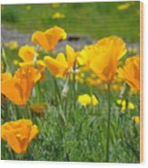 Poppies Meadow Summer Poppy Flowers 18 Wildflowers Poppies Baslee Troutman Wood Print