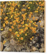 Poppies On The Rocks Wood Print