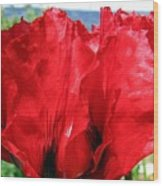 Poppies Plus Wood Print
