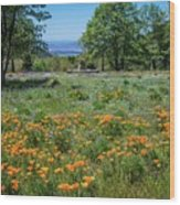 Poppies With A View At Oak Glen Wood Print