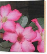 Poppin Pink Flowers Wood Print