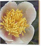 Poppy  05 Wood Print