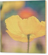Poppy 1 Wood Print