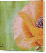 Poppy 9 Wood Print