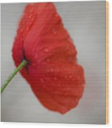 Poppy After The Rain Wood Print