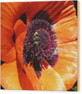 Poppy Art Wood Print