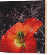 Poppy At Dusk Wood Print