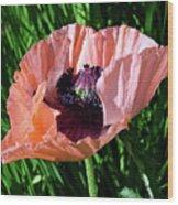 Poppy Beautiful Wood Print