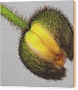 Poppy Bud Wood Print