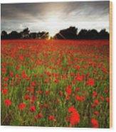 Poppy Field At Sunset Wood Print