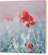 Poppy Field In Flower With Morning Dew Drops Wood Print
