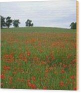 Poppy Fields In Suffolk Wood Print