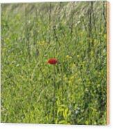 Poppy Flower Between Herbs Wood Print