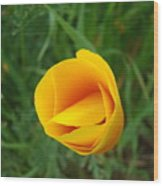 Poppy Flower Bud 9 Orange Poppies Green Meadow Art Prints Baslee Troutman Wood Print