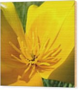 Poppy Flower Close Up Macro 20 Poppies Meadow Giclee Art Prints Baslee Troutman Wood Print