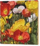 Poppy Flower Garden Wood Print