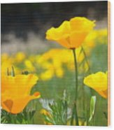 Poppy Flower Meadow 11 Poppies Art Prints Canvas Framed Wood Print