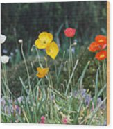 Poppy Flower Mix Wood Print