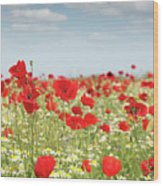Poppy Flowers Field Nature Spring Scene Wood Print