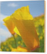 Poppy Flowers Meadow 3 Sunny Day Art Blue Sky Landscape Wood Print