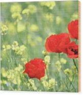 Poppy Flowers Spring Scene Wood Print