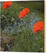Poppy Foursome Wood Print