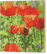 Poppy Garden I Wood Print