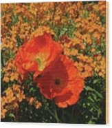Poppy Glories Wood Print