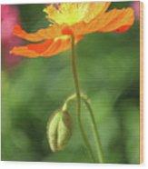 Poppy Glow Wood Print