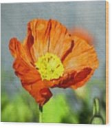 Poppy - Id 16235-142758-2720 Wood Print