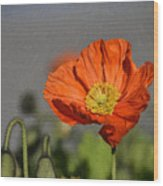 Poppy - Id 16235-142806-2801 Wood Print
