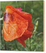 Red Poppy II Wood Print