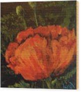 Poppy IIi Wood Print