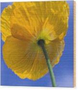Poppy In The Sky Wood Print by Kathy Yates