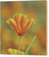 Poppy In The Sun Wood Print