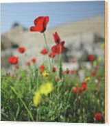 Red Poppy Flower On The Meadow Wood Print