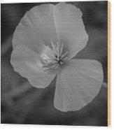 Poppy Monochrome Macro Wood Print