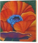 Poppy Pleasure Wood Print