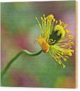 Poppy Seed Capsule Wood Print by Kaye Menner