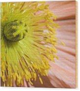 Poppy Whorls 1 Wood Print
