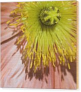 Poppy Whorls 2 Wood Print
