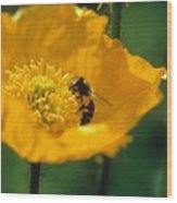 Poppy With Bee Friend Wood Print
