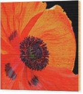 Poppy With Raindrops 2 Wood Print