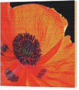 Poppy With Raindrops 3 Wood Print