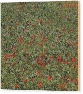 Poppyed Wood Print