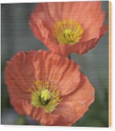 Poppys Wood Print by Barry Culling