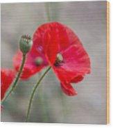 Poppys Wood Print