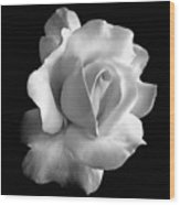 Porcelain Rose Flower Black And White Wood Print
