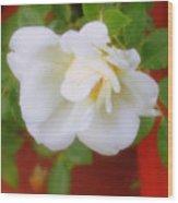Porch Rose Wood Print